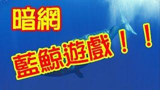 Download 體驗《暗網》俄羅斯藍鯨遊戲,深入報導~ Russian Blue Whale Game~deep web Video