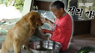 Download 할머니 이제 그만 밀어내실 때도 됐잖아요 ㅣ Cool Grandma Only Needs One Finger To Overpower Dem Giant Doggos LOL Video