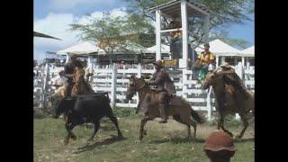 Download Pega de de Boi no Mato em Sergipe Video