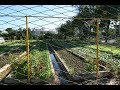 Download 쿠바의 도시농업(Agricultura Urbana) 현장 탐방 (종합) Video