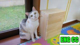 Download 猫部屋DIY&玄関用網戸の設置で廊下に籠る熱気の解消【Eng CC】 Video