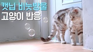 Download 캣닙 비눗방울을 본 고양이들과 아기집사 반응은? Reaction of the Cats and A Baby Seeing Catnip Bubbles [SURI&NOEL] Video