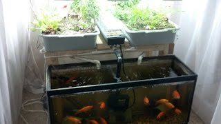 Download Small-Scale Aquaponics System For Hobbyists/Beginners Video