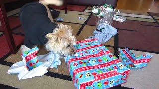 Download Puppies Opening Christmas Presents Compilation Video