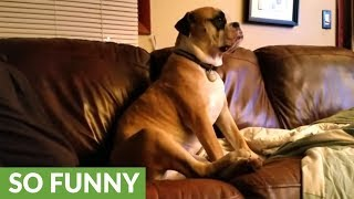 Download Owner engages in hilarious argument with his dog Video
