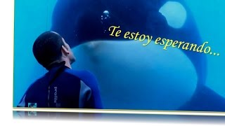 Download Muere Tilikum, la orca asesina de SeaWorld Video