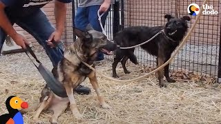 Download Dog Won't Leave Dog Best Friend's Side As She Learns To Walks Again | The Dodo Video