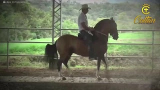Download XXXIV Nacional Equina - Valledupar Fedequinas Día 4 - TROCHA COLOMBIANA Video