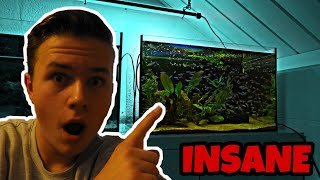 Download How I Got 200 Cardinal Tetras FOR FREE! Fish Room Tour! Video