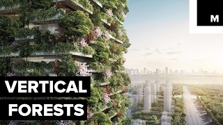 Download Forest skyscrapers to battle pollution Video