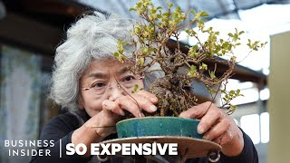 Download Why Bonsai Are So Expensive | So Expensive Video