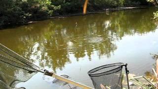 Download Pecanje šarana na plovak(KALAJ)-Carp fishing with float Video