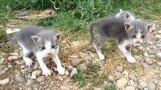 Download Nature - when a setter dog finds abandoned-orphaned kittens -Σκυλί βρίσκει εγκαταλελειμμένα γατάκια Video