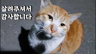 Download 집냥이가 되고픈 길냥이 (길고양이 구조4부) Video