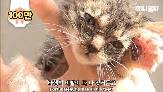 Download 벽에 갇힌 새끼 고양이 위해, 사람에게 도움 요청하는 고양이 Video