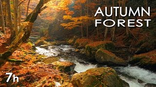 Download Autumn Forest - Relaxing Nature Video - River Sounds - White Water - HD - 1080p Video