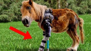 Download Amazing Animals With PROSTHETIC LIMBS! Video