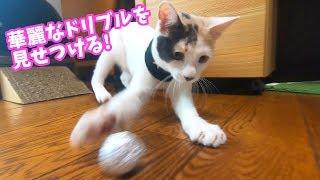 Download 初めてのアルミホイル玉に大はしゃぎな子猫 Video