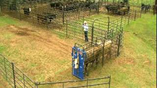 Download Priefert Small Cattle Working Systems Video
