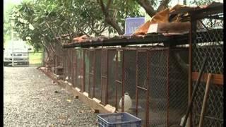 Download Hình ảnh trang trại động vật hoang dã Thanh Long từ HTV9 Video