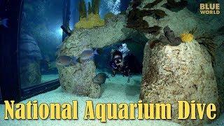 Download National Aquarium Visit   JONATHAN BIRD'S BLUE WORLD Video
