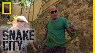Download Mamba Shakedown | Snake City Video