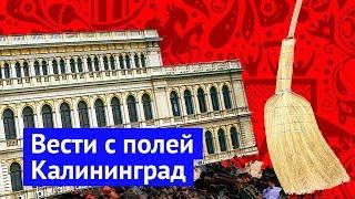 Download Вести с полей: большой футбол в Калининграде Video