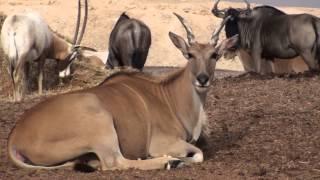 Download The Arava Antelope Ranch Video