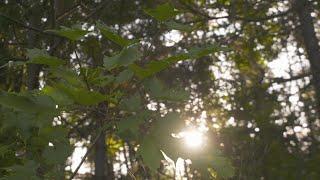 Download Enquête   La forêt désenchantée Video