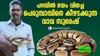 Download OMG! Vava Suresh is with the Python that sowed the seeds of horror | Vava Suresh | Snakemaster Video