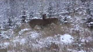 Download My First Saskatchewan Deer Video