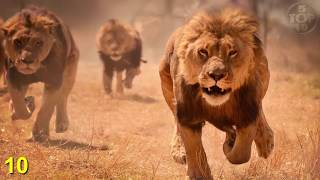 Download Top 10 Unbelievable Animals That Saved People's Lives Video