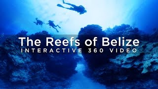 Download The Reefs of Belize - 360° Video Video