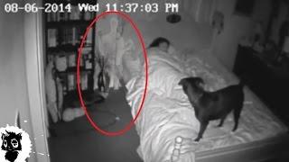 Download 5 РЕАЛЬНЫХ СЛУЧАЕВ КОГДА ДОМОВОГО СНЯЛИ НА КАМЕРУ [Черный кот] Video