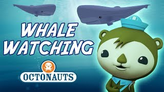 Download Octonauts - Whale Watching | Cartoons for Kids | Underwater Sea Education Video