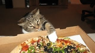 Download ″Cats Stealing Pizza Compilation″ || CFS Video