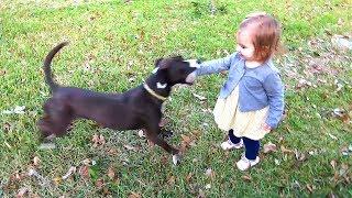 Download DOG BITES AT BABY! Video