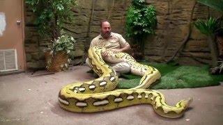 Download Grandes Serpientes de Jay Brewer / La Ceja Virtual Video