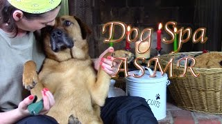 Download Soggy Pawz Doggy Spa: (ASMR for Dogs & People Who Like Dogs) Video
