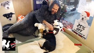 Download Holiday Puppies - RT Life Video