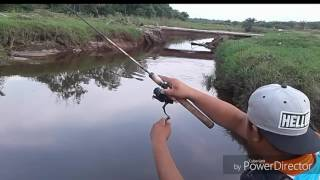Download Casting Ikan Toman @ giant snakehead with Ultralight Fishing Video