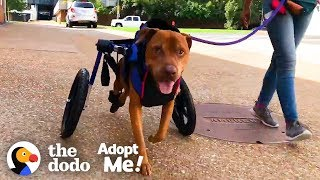 Download Dog Rescued From Under an Abandoned House Looking For a Family | The Dodo Adopt Me! Video