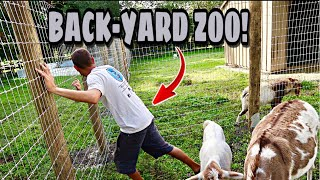 Download Preparing for a BACK-YARD ZOO!!! Video