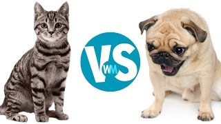 Download Cats Vs Dogs: Which Makes a Better Pet? Video