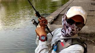 Download Casting bawal/pacu.Mcc Balekambang Fishing Pond Video