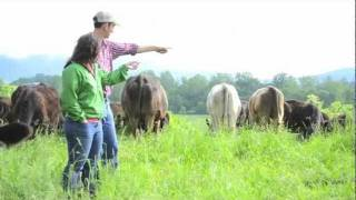 Download A Day in the Life: On a Small Meat Farm.m4v Video