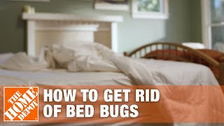 Download How to Get Rid of Bed Bugs | DIY Pest Control Video