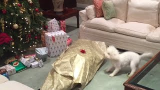 Download Dog Unwraps Owner for Christmas Video