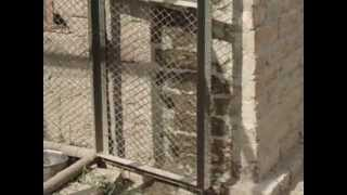Download Kabootar Raja(Z) From 21sb Kot Momin Sargodha Video