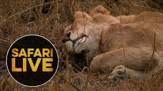 Download safariLIVE - Sunrise Safari - August 10, 2018 Video